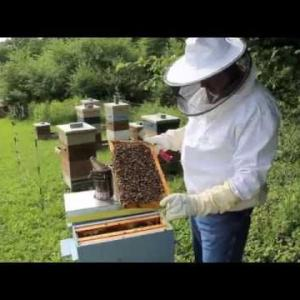 Cattaraugus County Legislator Is Also A Beekeeper