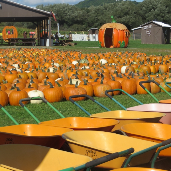 Pumpkins, pumpkincarts, pavilion, magic pumpkin and more at Pumpkinville in Great Valley, NY